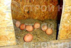 Домик для кур - 019 1,2х1,7 - 1